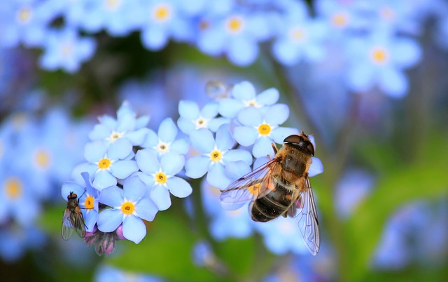 Insect lesson plans for preschool - Bees